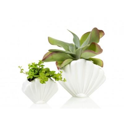 Vase Shell Small White